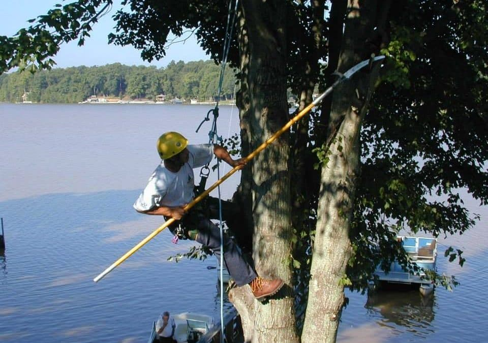Frady Tree Care Specialists Offer Comprehensive Tree Care to Clemmons Community