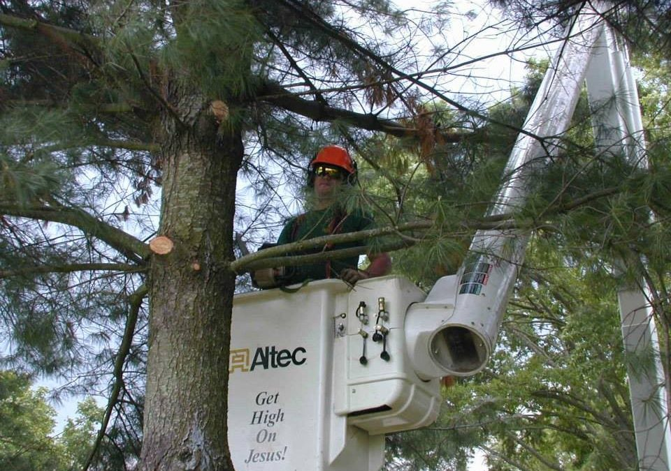 Local Arborist Shares Tree Care Tips